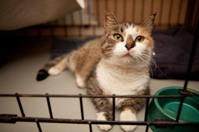Чудесная история найденной в снегу кошки: ее спасение