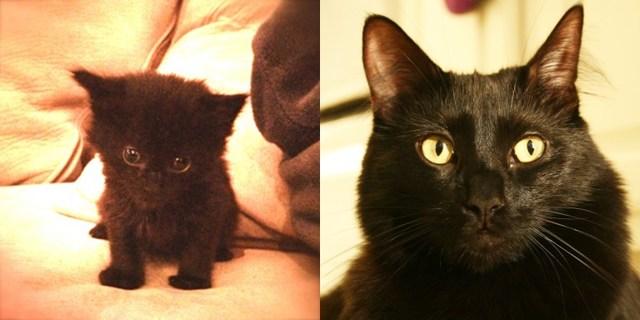 История о том, как Коул и Мармелад стали звёздами интернета и помогли спасти большое число кошек