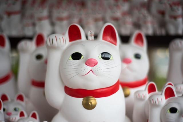 Фотографии, ставшие уникальными благодаря котам