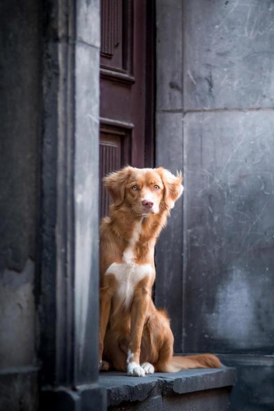 Фотогеничность уровень БОГ или как животные фотографируются на паспорт