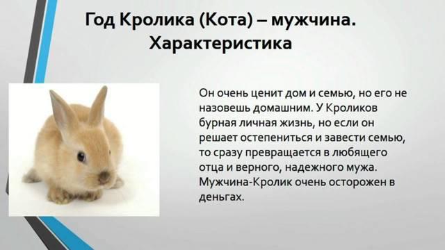 Год Кота (Кролика): когда будет, характеристика, так как же правильно