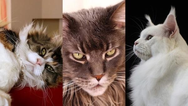 Вот Цуки, кошка, которая живет лучше, чем вы, фото ее жизни