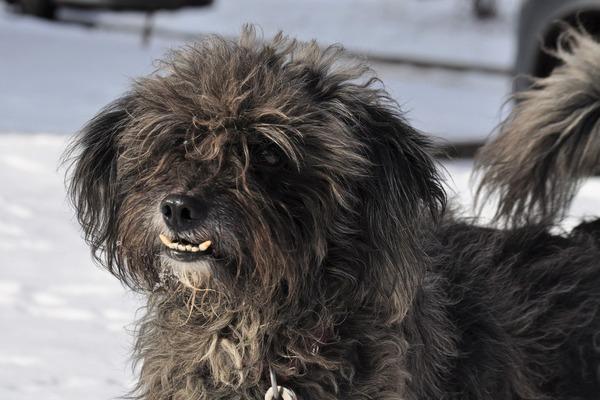 Каталог приютов для бездомных животных в Москве и Санкт-Петербурге