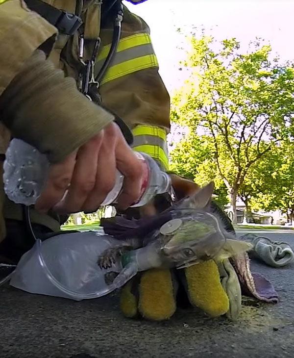 Чудом спасенный при пожаре котенок обрел семью