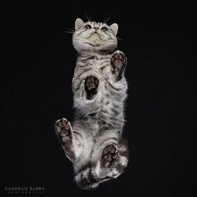 Фото кошек снизу от фотографаАндрюса Бурба, разные породы