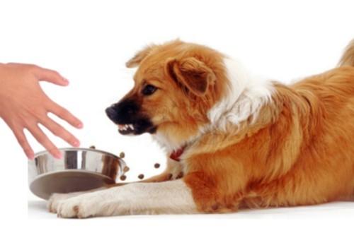 4 типа щенков: наверняка вы с ними встречались
