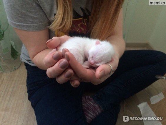 Как живет кошечка без слуха