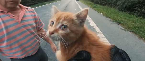 Человек останавливает движение на оживленном шоссе, чтобы спасти крошечного котенка