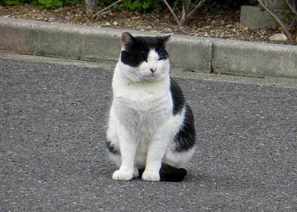 Бродячая кошка сама выбрала себе в парке хозяина
