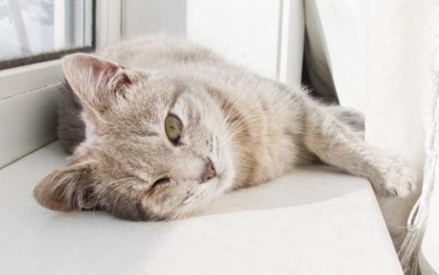 5 признаков того, что кошке нравится быть вашим питомцем