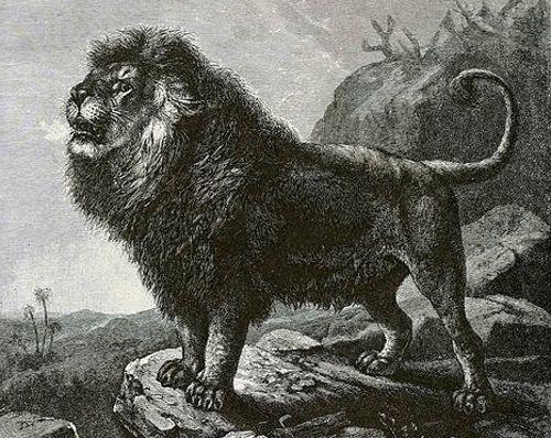 Гигантские львы, жившие сотни тысяч лет назад