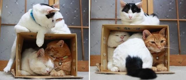 Чем коты на самом деле на выставках занимаются. Рассказывает кот Шерлок.