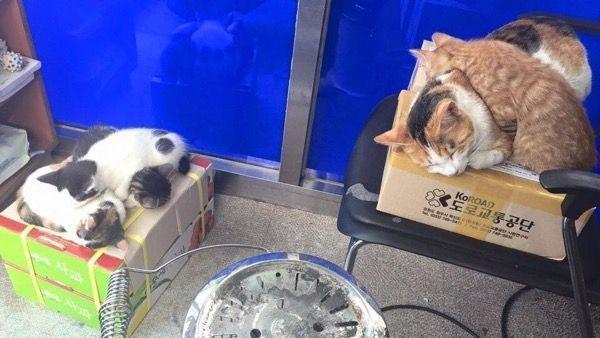 Бездомная кошка находит дом в полицейском участке