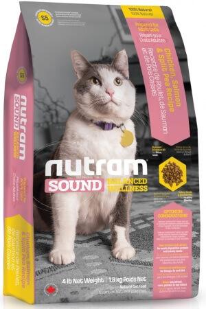 Анатолийская кошка (турецкая короткошерстная): описание, фото