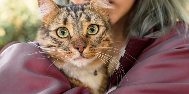 Понимают ли кошки человеческую речь: что считают ученые