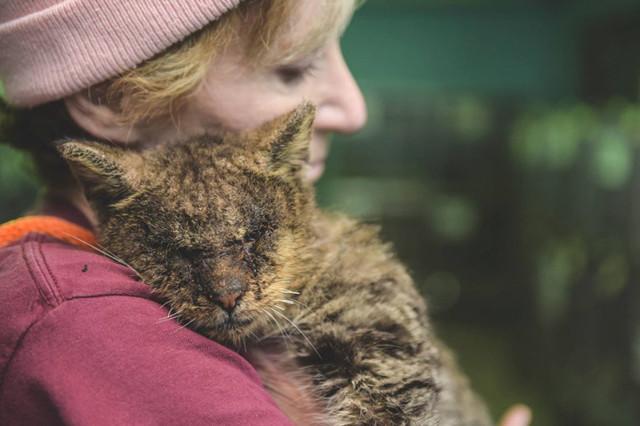 Все боялись дотронуться до этого кота, но одной женщине было все равно
